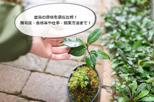 盆栽の資格を徹底比較!難易度・合格率や仕事・開業方法まで!