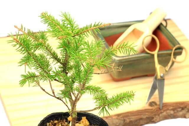 盆栽鉢のサイズと鉢映りのよい鉢の選び方