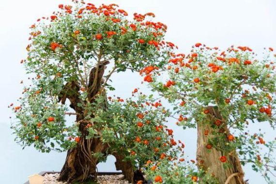 盆栽作り方