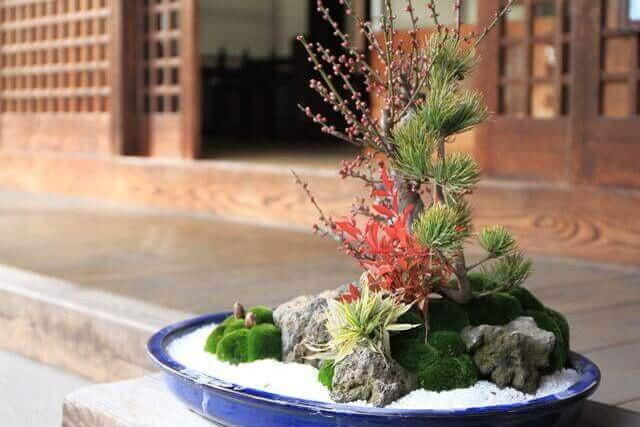 盆栽と鉢植えの違いと共通点