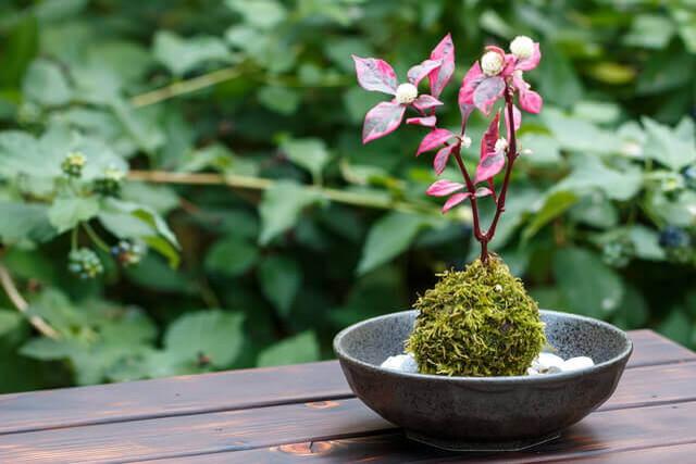 盆栽用土の失敗しない基本の作り方と盆栽の土の種類