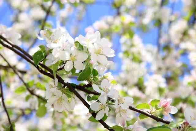 桜の盆栽の作り方と必要な道具一式