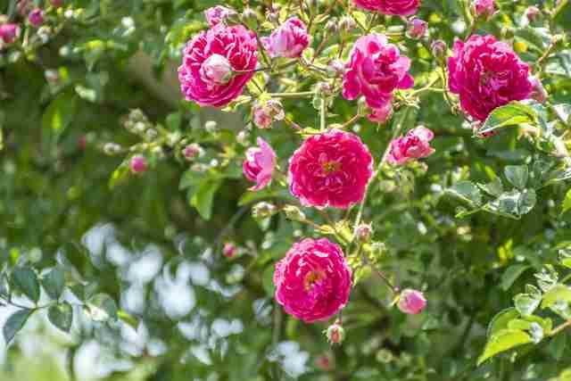 梅の盆栽育て方カレンダーと日常管理から手入れの仕方