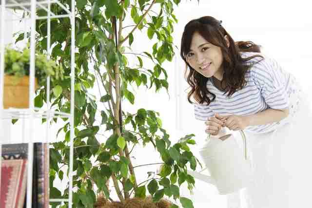 黒松・カリン・サツキ盆栽の作り方
