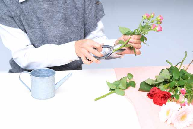 盆栽初心者にもできる黒松や手のひら盆栽の作り方