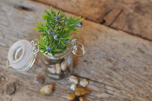 盆栽の剪定や作り方に関する重要用語