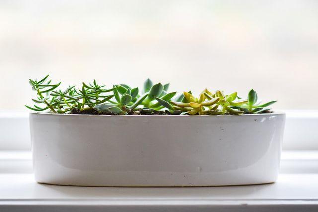 盆栽と苔の関係と良い苔の見分け方