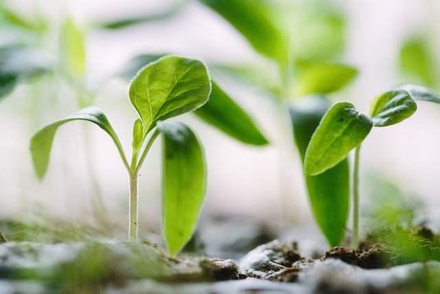 梅盆栽の育て方と日常の管理