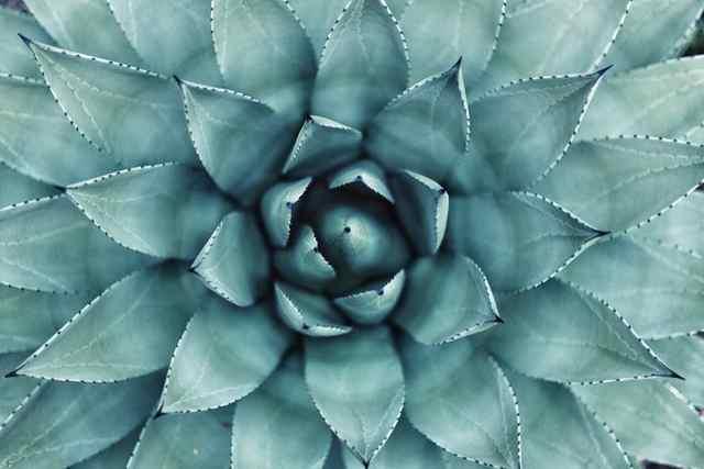 盆栽のつくり変え4つの具体例
