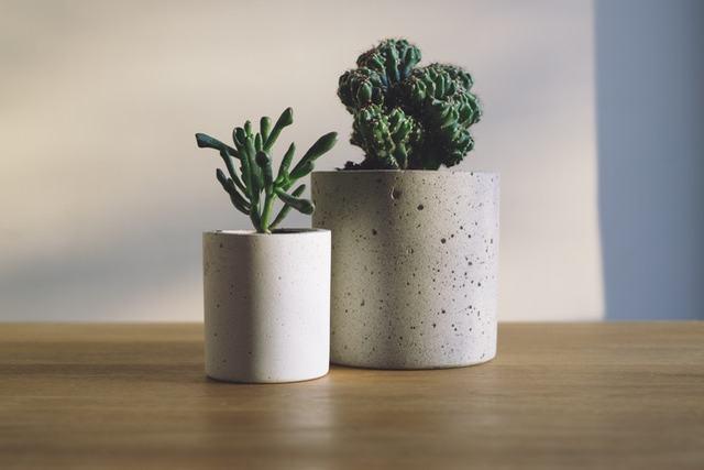 東京で素敵な盆栽鉢を購入できる販売店2選