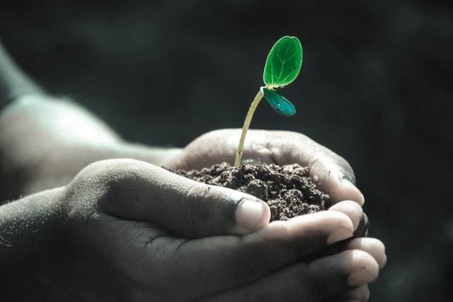盆栽に使うおすすめの用土6選