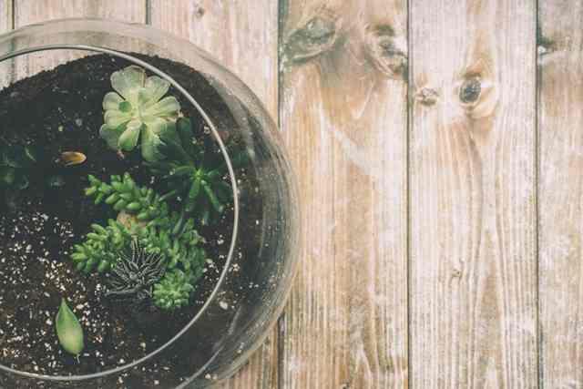 黒松盆栽の年間計画と正しい育て方