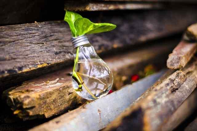 盆栽の施肥に必要な肥料6種