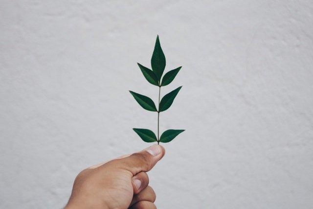 盆栽の病気の種類と詳しい対処方法