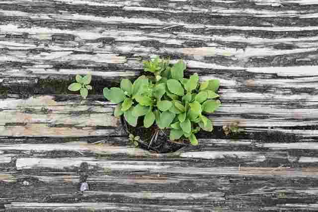 もみじ盆栽の育て方と1年間の管理
